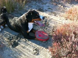 frisbee pause 2836