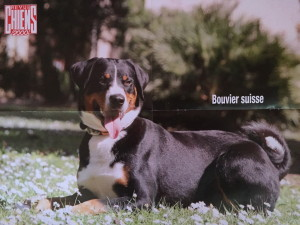 chiens 2000 IMG 2311