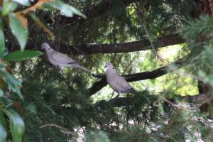 oiseaux-du-ciel-0560.JPG
