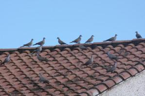 oiseaux-du-ciel-1739.JPG