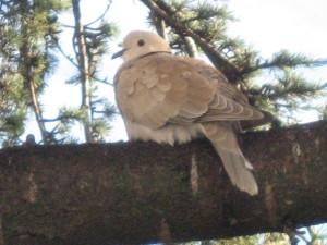 oiseaux-du-ciel-5169.JPG