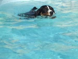 Nelson-piscine.jpeg