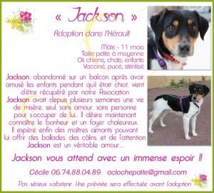adoption_JACK 3_1024